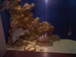 食べられる魚!